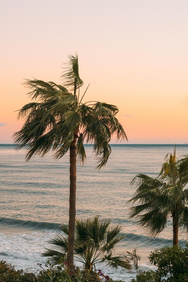 West Coast Palm Trees